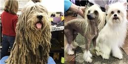 Những thí sinh cún độc lạ rộn ràng 'thả thính' trong cuộc thi chó đẹp