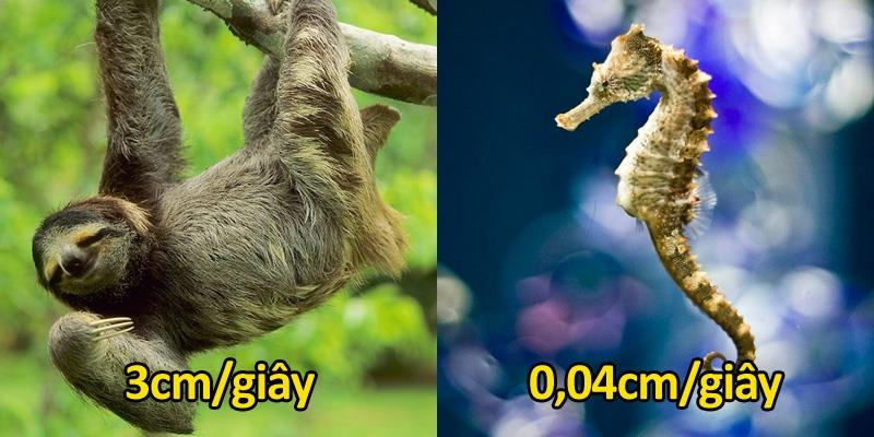 """Những động vật có tốc độ di chuyển chậm chạp """"gây ức chế"""" nhất"""