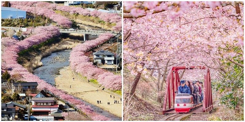 """Nhìn xem, """"cơn lốc màu hồng"""" đã bắt đầu """"đổ bộ"""" vào Nhật Bản rồi này!"""