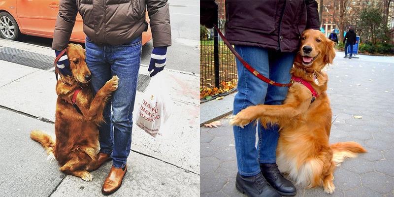 """Cưng hết nấc cô chó """"cuồng ôm"""" mọi lúc, mọi nơi, mọi người"""