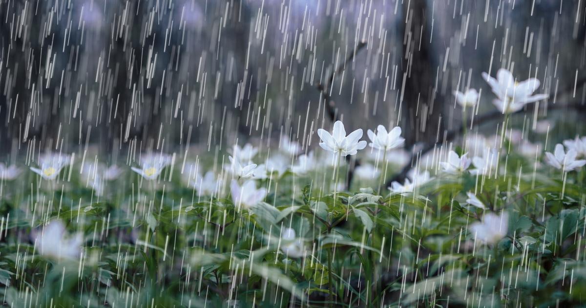 Khi mưa bụi đáng sợ hơn mưa rào