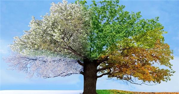 Câu chuyện cây lê bốn mùa