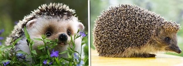 Những động vật luôn ước mơ chúng xinh xắn như khi còn bé!