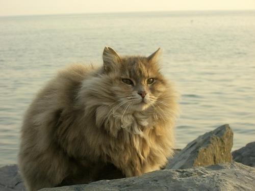 Ngộ nghĩnh những nàng mèo thời thượng