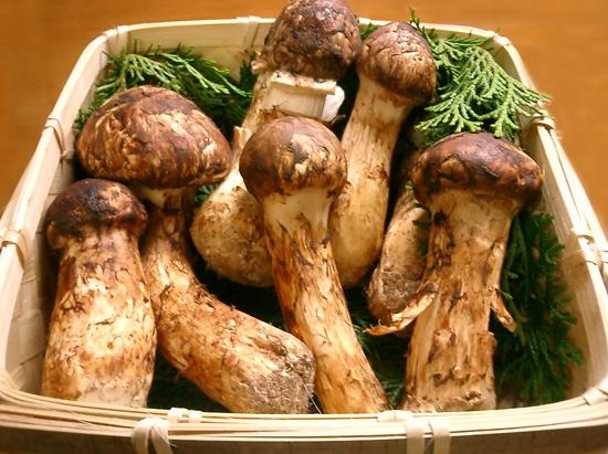 Những công dụng tốt cho sức khỏe từ nấm