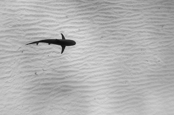 Ấn tượng với chân dung sống động của các sinh vật biển
