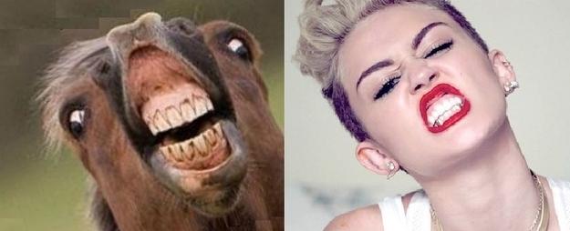 16 chú ngựa trông giống y hệt...Miley Cyrus