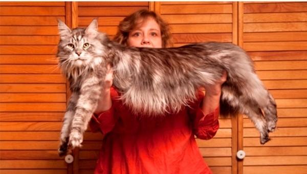 Top 10 thú cưng khổng lồ nhất thế giới