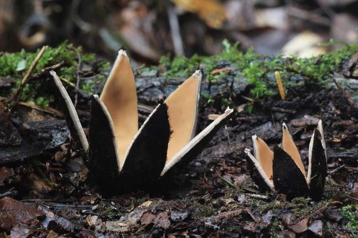 Cận cảnh những loại nấm siêu lạ nhất thế giới