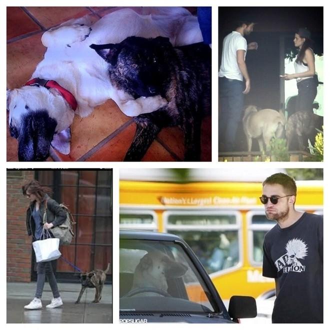 Hai chú chó Bear và Bernie Robert nuôi chung với Kristen khi còn sống chung.