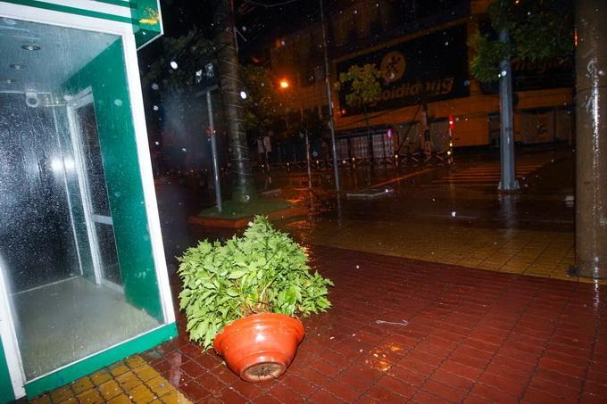Một số chậu hoa cây cảnh giữa thành phố bị gió lớn quật đổ