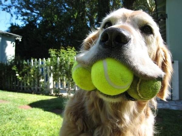 Chó và Mèo - Những khác biệt cơ bản khiến bạn bật cười