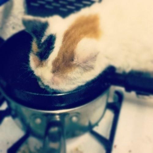Làm bánh cùng đầu bếp... mèo
