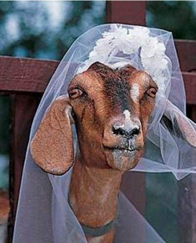 Ngỡ ngàng những đám cưới giữa người với… động vật