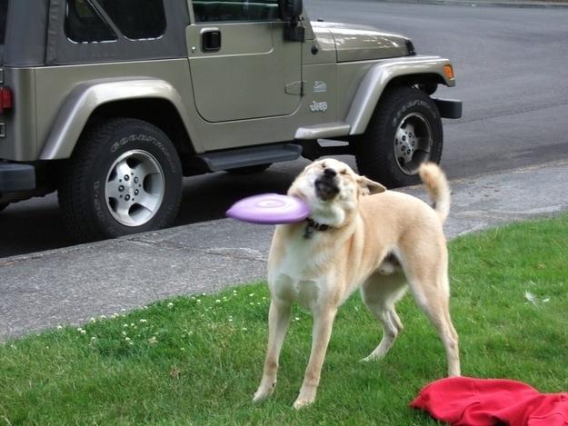 Khoảnh khắc đĩa bay đập vào mặt chú chó này từngđược lan truyền rộng rãi trên cộngđồng mạng.Đúng là khỏi néđược!