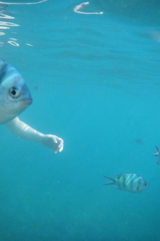 """""""Người cá"""" thật sự xuất hiện trên tráiđất này rồi sao?"""