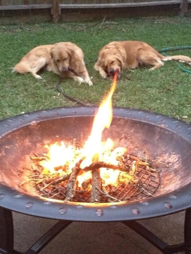 Chú chó vời khả năngphun lửa như rồng nhỉ