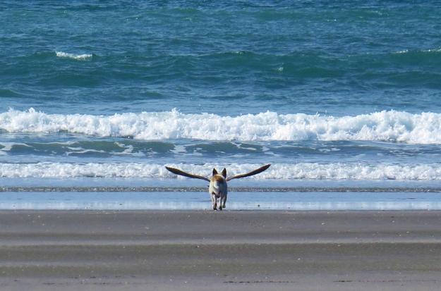 Chú chó có cánh.