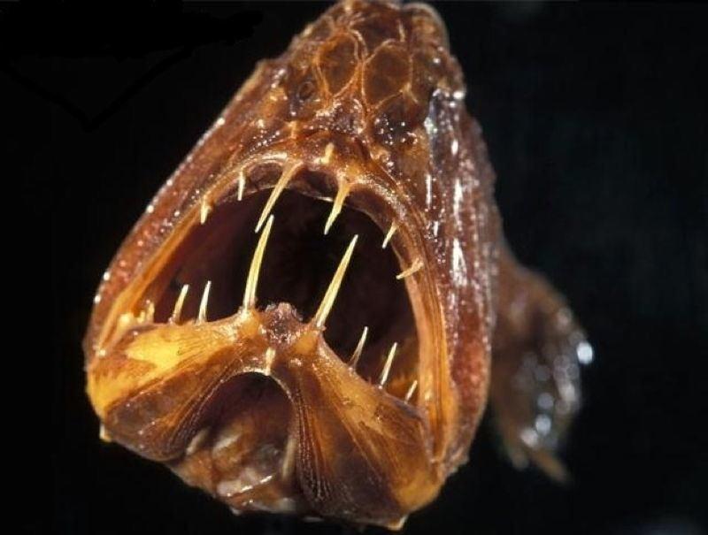 7 loài cá kì lạ có hình thù đáng sợ nhất đại dương