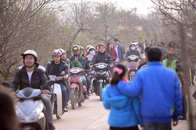 Ngay từ sáng sớm các ngày cuối tuần, đoàn người kéo dài không ngớt liên tục đổ về vườn đào Nhật Tân.