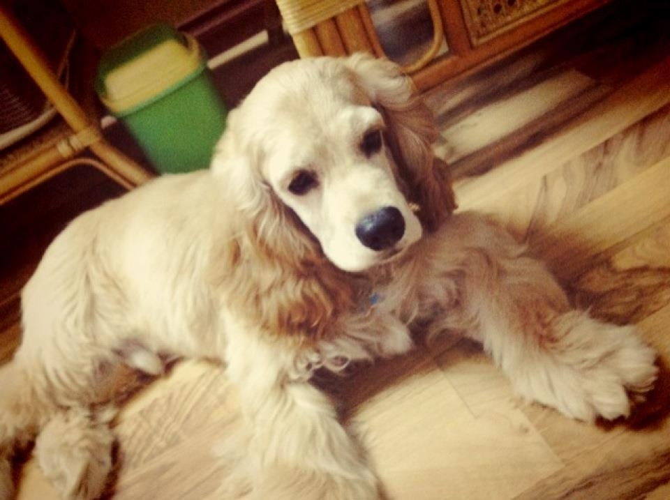 """Ngoài Nhiu ra, ở quê nhà, Bích Phương còn nuôi một chú cún cực xinh, và đặt tên là... Cookie - """"lấy cảm hứng"""" từ người bạn thânTiên Cookie. - Tin sao Viet - Tin tuc sao Viet - Scandal sao Viet - Tin tuc cua Sao - Tin cua Sao"""