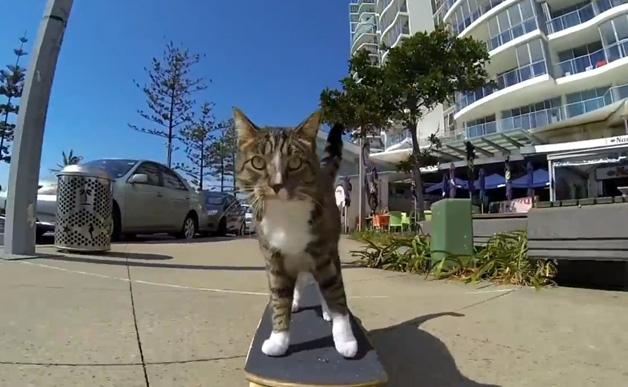 Ngộ nghĩnh chú mèo trượt ván siêu điệu nghệ