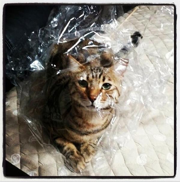 Sandara cũng thể hiện sự phát cuồng những chú mèo của mình.