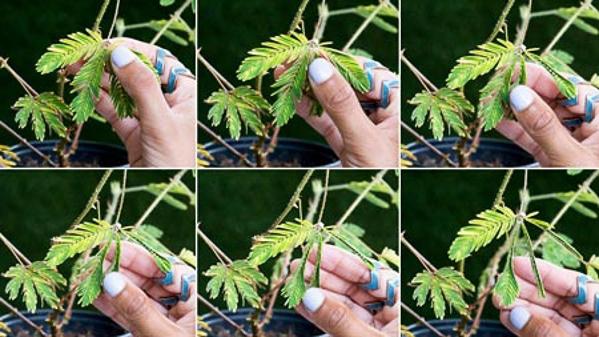 Những khả năng đặc biệt giống con người của các loài cây
