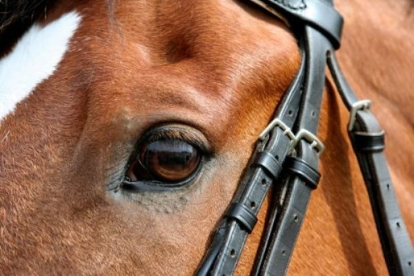 Năm Ngọ khám phá 10 điều thú vị về loài ngựa