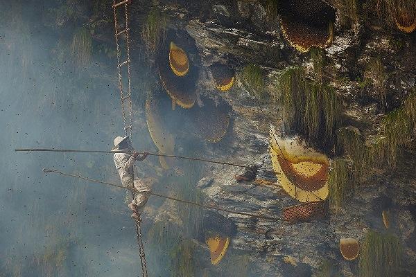 Người đàn ông dùng thanh che dài lắp dao ở đầu để cắt sáp ong