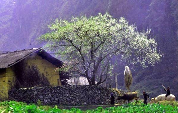 Ngất ngây khung cảnh quyến rũ trên đất Hà Giang