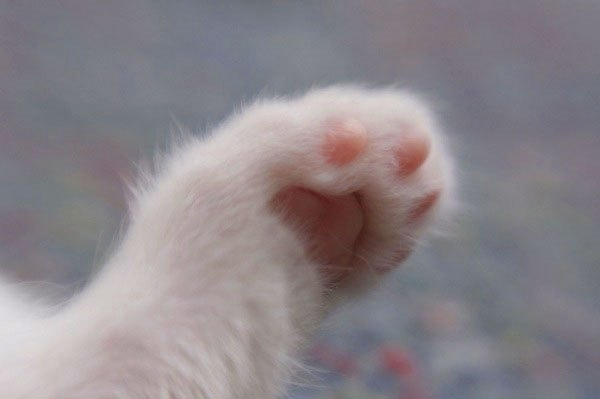 """Bật mí những """"bí mật"""" bạn chưa từng biết về loài mèo"""