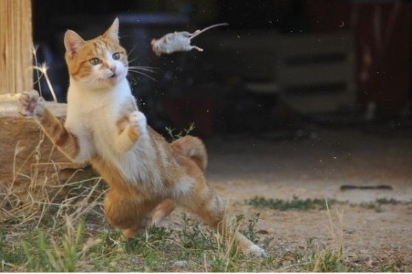 """""""Hay là mình cứ bất chấp hết mà lao đầu vào mèo thôi..."""""""