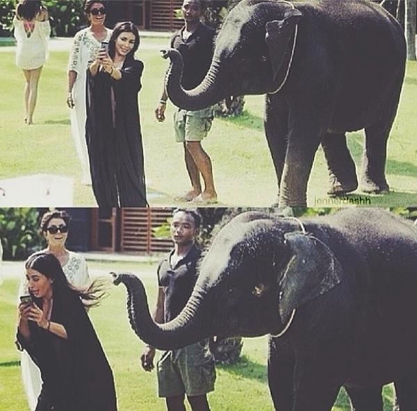 """Sau khi chụp hình """"tự sướng"""" cùng với chú voi xong, Kim Kardashian có vẻ hốt hoảng bỏ chạy khi chú voi này bày tỏ tình cảm với cô."""