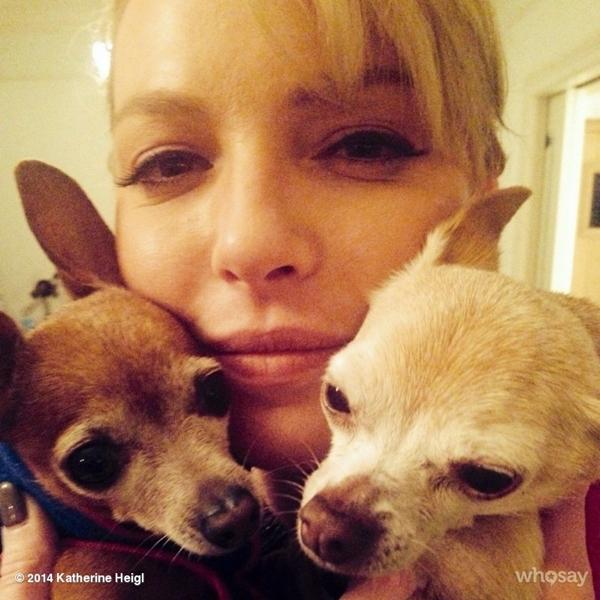 Katherine Heigl rúc vào hai chú chó Chihuahua của cô. Cô khá thích thú với điều này.