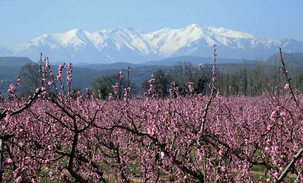 Cảnh đẹp ngây ngất khi mùa xuân đến tại các nước băng giá