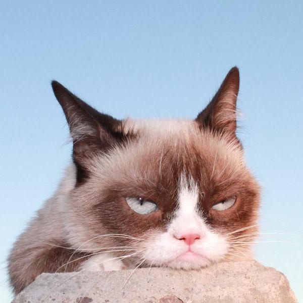 """Các con vật cực đáng yêu và """"nổi đình nổi đám"""" trên mạng xã hội"""