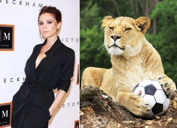 Victoria - bà xã ca sĩ của danh thủ David Beckham.