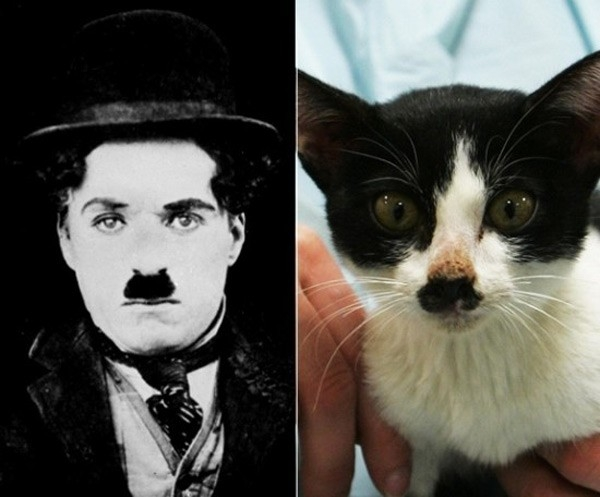 Danh hài thế giới Charlie Chaplin.