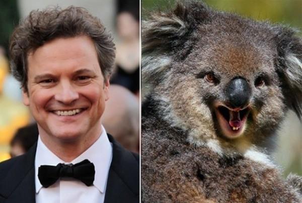 Tài tử người Anh Colin Firth.