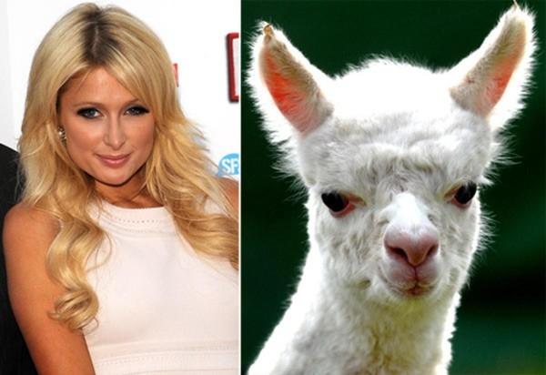 Cô nàng sành điệu Paris Hilton.