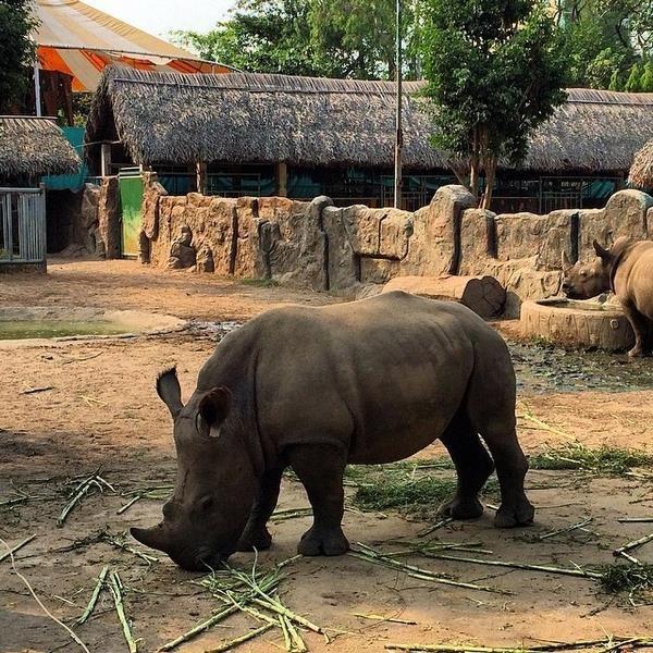 Thảo Cầm Viên có rất nhiều loài thú khác nhau