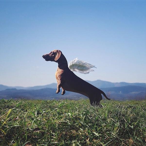 Rất nhiều bức ảnh của nhiếp ảnh gia Simone Bramante chụp mẫu đang chuyển động.