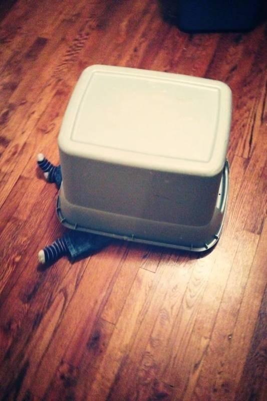 """""""Hóa thân thành cái hộp có chân sẽ chẳng ai biết mình trốn ở đây cả"""""""