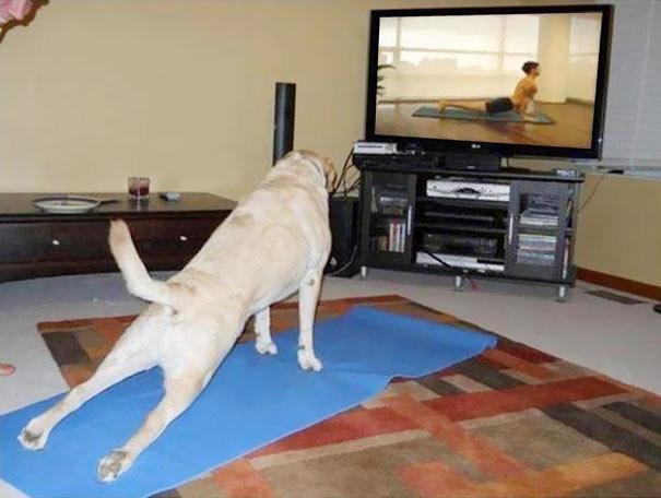 Có hẳn đệm lót và cả hướng dẫn tập yoga cực kì bài bản luôn nhé.