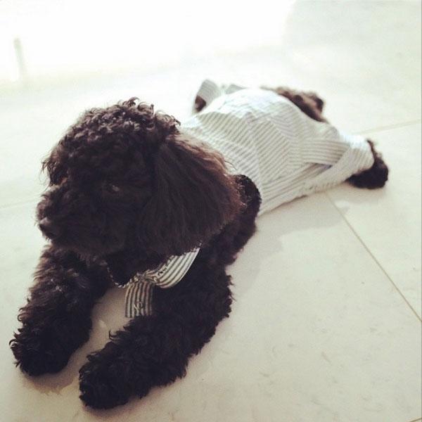 Taeyeon đăng hình ảnh chú cún Ginger mặc đồ cực đáng yêu