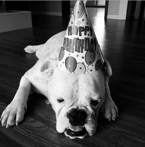 Taeyang khoe hình chúc mừng sinh nhật chú chó Homie