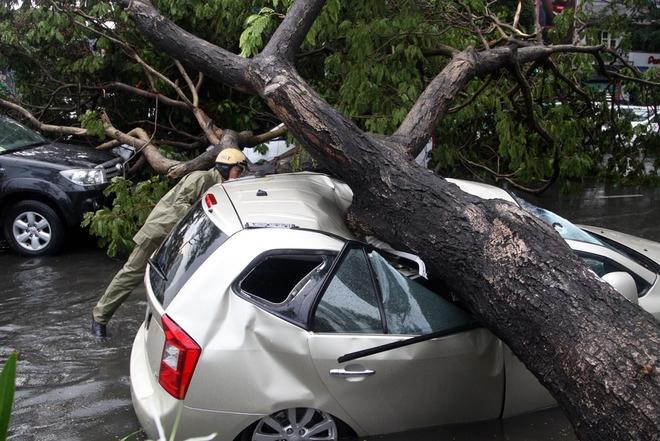 3 ôtô 7 chỗ khác, trong đó có một taxi do tài xế Trần Văn Thạch chở một khách nam vừa chạy đến cũng bị tán cây đập lên thân xe. May mắn không có thương vong về người.