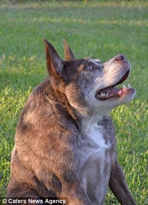 Cộng đồng mạng thích thú với cuộc thì tìm chó xấu đầy ý nghĩa