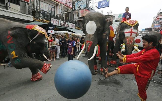 Thái Lan tổ chức ngày hội voi đá bóng nhằm cổ vũ cho World Cup và khuyên người dân tránh xa tệ nạn cá độ. Trên người mỗi chú voi vẽ cờ đại diện cho từng đội tuyển tại World Cup.